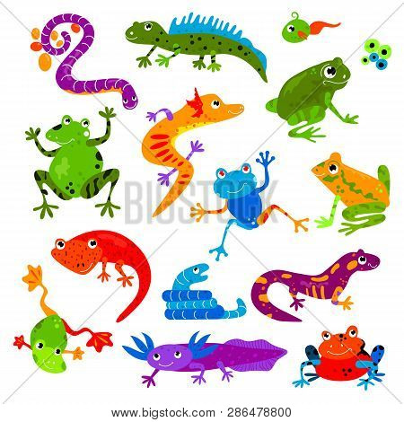 Reptile Vector Animal Reptilian Amphibian Froggy Character Lizard Turtle Iguana And Chameleon Pet Il