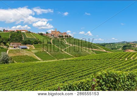Green vineyards on the hills under blue sky as small town of Castiglione Falletto on background in Piedmont, Italy.