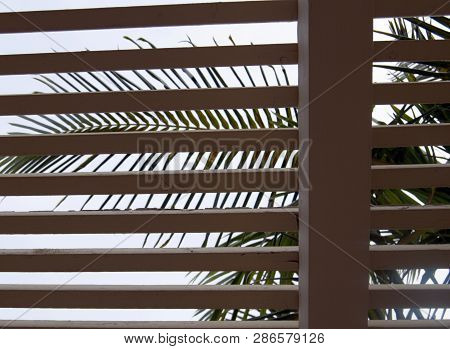 Open Window Shutter Blinds With Palm Branch