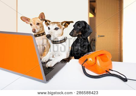 Team Or Couple Of Dogs  With Glasses As Secretary Or Operator With Red Old  Dial Telephone Or Retro