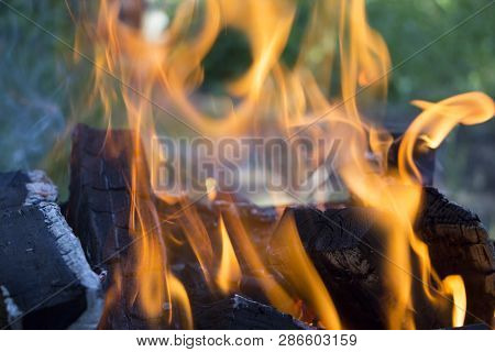 Firewood In Fire Flames. Background.