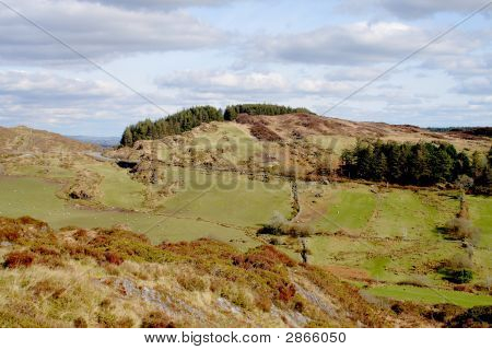 Sunny tree lined hilltop with sheep scattered in the hillside fields below poster
