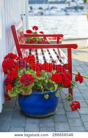 Red Wooden Bench And Red Geranium Flowers
