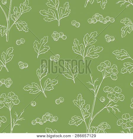 Coriander Cilantro Plant Graphic Color Seamless Pattern Background Sketch Illustration Vector