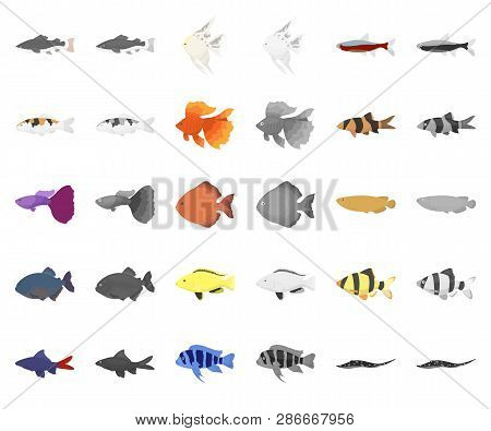 Different Types Of Fish Cartoon, Monochrom Icons In Set Collection For Design. Marine And Aquarium F
