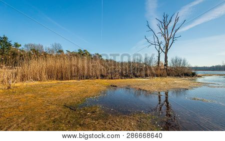 Silhouettes Of Two Dead Trees Reflected In The Water Surface Of A Mere Of The Galderse Heide, A Natu