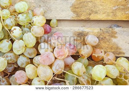 Macro View Of Fresh Juicy White Seedless Grapes On A Wooden Tray In The Market As Natural Background