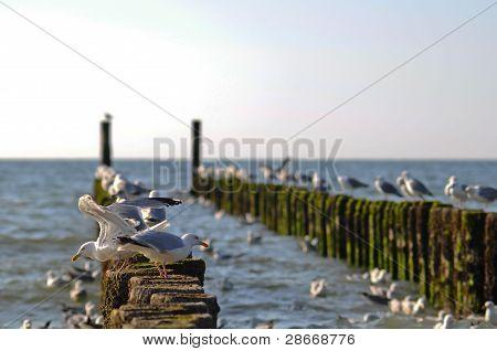 Saegull pier in Zeeland