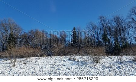 Winter Landscape - Forest Snowy Winter Trees In Clear Blue Winter Weather. Winter Nature Tranquil Sc
