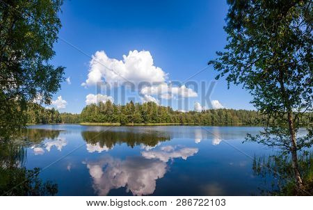 Cloud reflecting in calm blue water of summer lake in a boreal forest, Panoramic view with birch trees in foreground