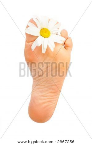 Beautiful woman foot. Isolated over white background poster