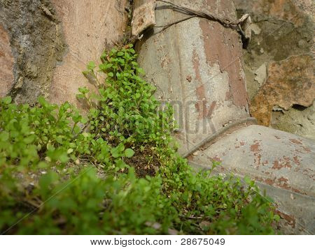 Moss On A Rock. Downspout