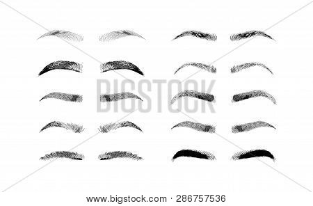 Eyebrow Shapes. Various Types Of Eyebrows. Classic Type And Other. Trimming. Vector Illustration Wit