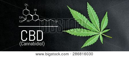 Cbd Cannabis Formula. Cbd Oil Cannabis Extract, Medical Hemp Concept
