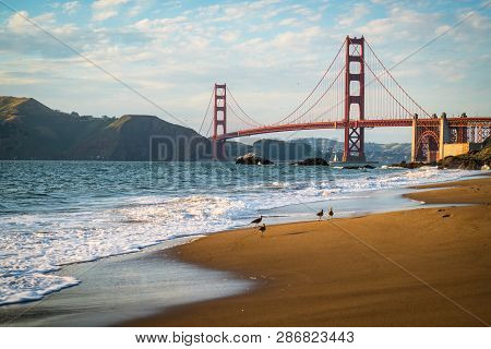Golden Gate Bridge With Birds Walking Along The Shoreline Of Soft Breaking Waves Along The Northern