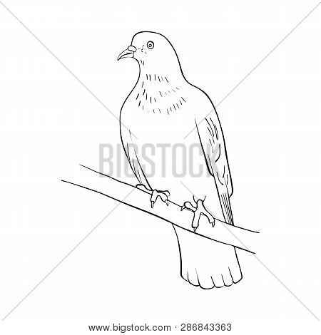 Vector Line Drawing Vector Photo Free Trial Bigstock