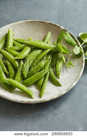 freshly collected sugar snaps