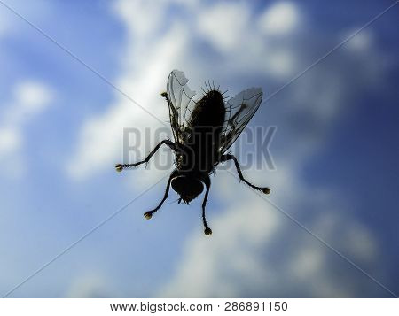 House Fly Close Up Macro - Domestic Fly On Window Against Sky - Shallow Depth Of Field Shot Of Live