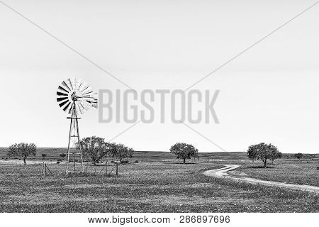 A Windmill And A Road In A Field Of Wildflowers Near Nieuwoudtville In The Northern Cape Province. M