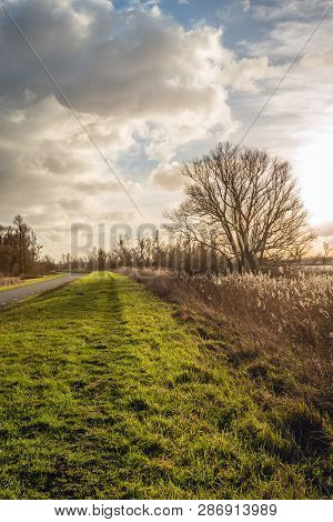 Picturesque Landscape With A Long Curved Country Road And A Tall Bare Tree In Backlit. The Photo Was