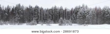 Winter Landscape In The Karelian Wood