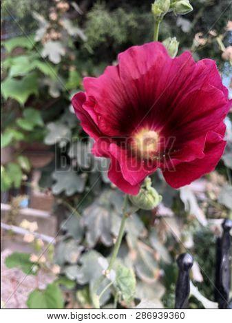 Yeşil Bitkilerin Arasında Kırmızı Yapraklı Bir Çiçek poster