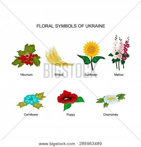 Vector Set Of Floral Symbols Of Ukraine. Colorful Cliparts Of Viburnum, Wheat, Sunflower, Mallow, Co