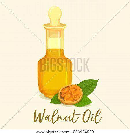 Glassware Jar Or Bottle With Walnut Oil. Groundnut Liquid Near Nut Food. Closeup For Healthy Drink O