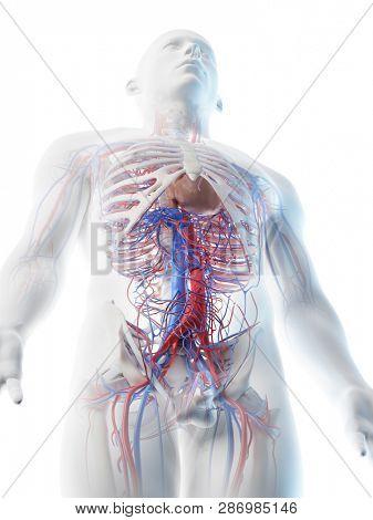 3d rendered illustration of a mans vascular system of the upper body