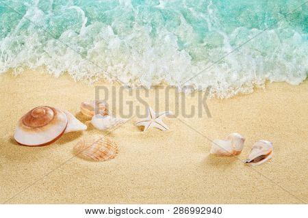 Shells on the beach. Tropical sea. Splashing waves on the seashore.