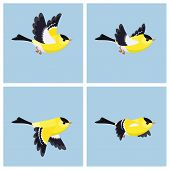 Vector illustration of cartoon flying American Goldfinch (male) sprite sheet. Can be used for GIF animation poster