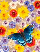 Abstract background image of colorful flowers floating in water, with a blue butterfly poster