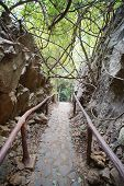 Walkway and handrails to go to Ancient forest Hup Pa Tat in Uthai Thani, Thailand. poster