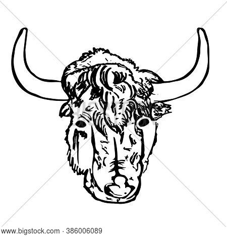 Yak Head Isolated On White Background. Hand Draw Taurus Sketch. Antique Engraving Of Highland Cattle