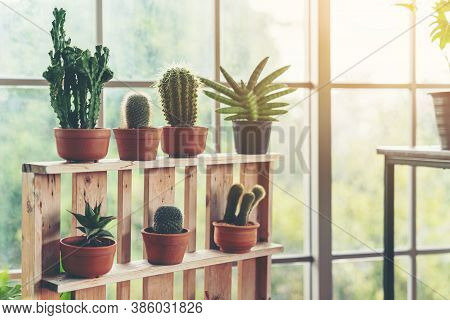 Scandinavian Room Interior With Plants, Cacti And Succulents Composition In Design And Hipster Pots