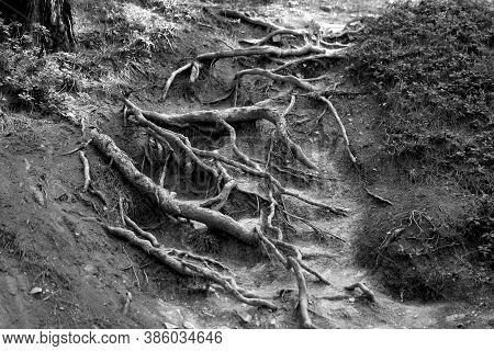 Photo Background Tree Roots In A Dense Forest
