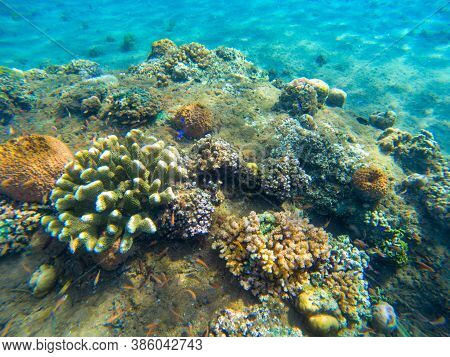 Coral Reef And Fishes Underwater Photo Closeup. Tropical Sea Bottom View. Diverse Coral Reef Plants