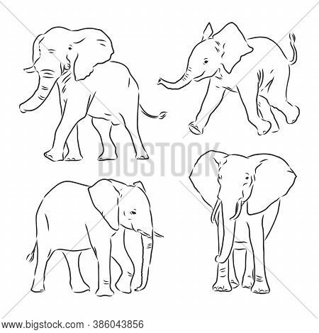 Vector Illustration. Hand Drawn Realistic Sketch Of An Elephant. Elephant Vector Sketch Illustration