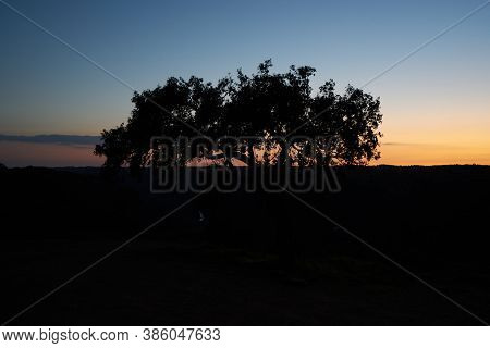 Beautiful Olive Tree Silhouette In Pulo Do Lobo Waterfall With River Guadiana In Mertola Alentejo, P