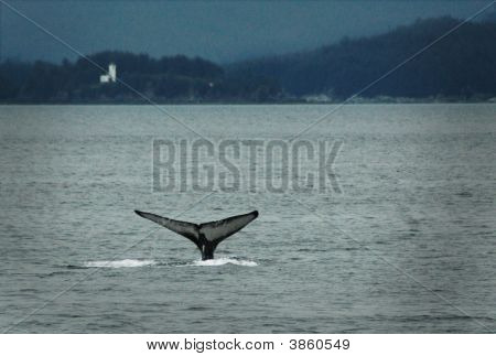 Humpback whale diving in the waters of Stephan's Passage outside Juneau Alaska poster