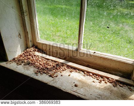 Closeup Of The Window Sill In The Ranger Cabin On The Baldy Mountain Hiking Trail In Duck Mountain P