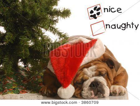 Bulldog Under Christmas Tree Nice