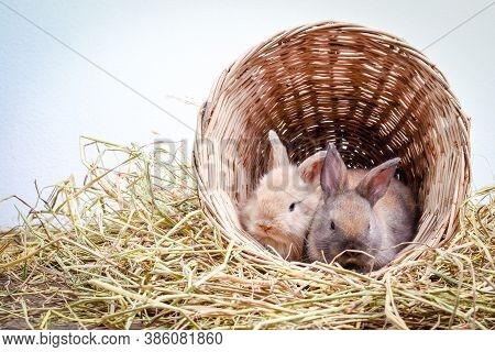 Two Little Rabbits Huddled In A Wooden Basket On The Hay.
