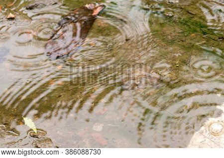 Rain Drops In The Water Surface. Rain Fall On The Ground In Rains Season. Raindrops Rippling In A Pu