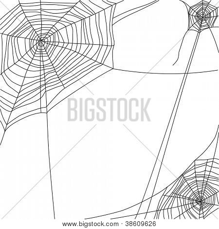 spider web on white background