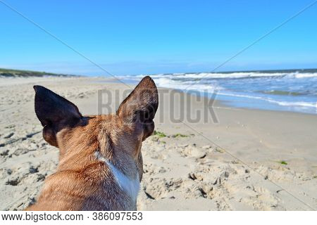 Back Of Head Of A Brown French Bulldog Dog With Pointy Ears In Front Of Summer Holiday Beach And Oce