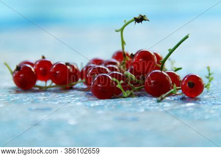 A Sprig Of Juicy Tasty Red Currant Lise On Table Close-up