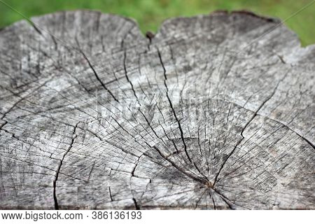 Gray Radial Cut Wood Texture. Radial Cut Of The Tree. Gray Dry Tree Stump Natural Old Wood Stump Tex