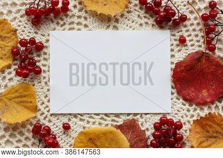 Autumn Background With Copying Space. An Empty Sheet Of Paper, Clusters Of Viburnum And Fallen Aspen