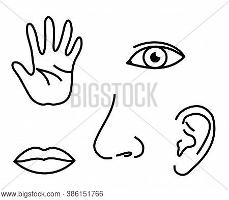Human Sense Organs On A White Background. Silhouette. Vector Illustration.